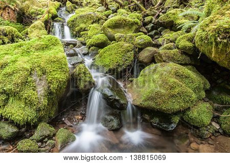 Cascades through moss covered rocks in Washington.