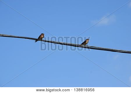 two small birds sitting on a utility wire.