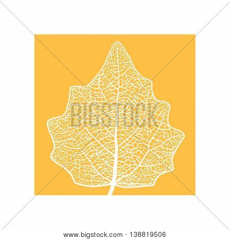 Vector skeletonized leaf of a Lombardy poplar. The graphic element may be used as a design background, business cards, postcards, etc.
