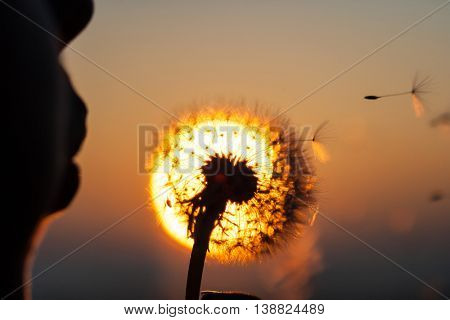 girl blowing dandelion during sunset, close up