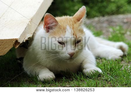 street red and white homeless cat sleeping lightly on the grass in the shade in summer
