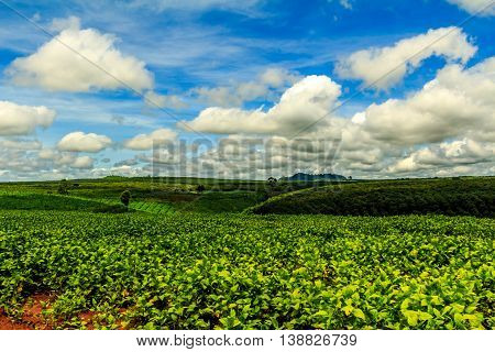 Rolling green hills under a blue sky in the idyllic Cambodian countryside