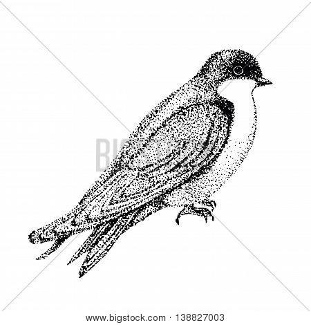 vector illustration bird. bird in graphic style. vector illustration urban swallow