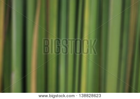 Line,The green line,Green lines background,Green lines background blur