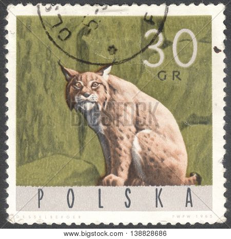 MOSCOW RUSSIA - JANUARY 2016: a post stamp printed in POLAND shows an animal with the inscription