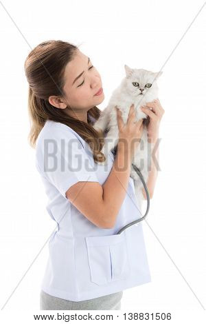 veterinarian examines a cat on white background isolated