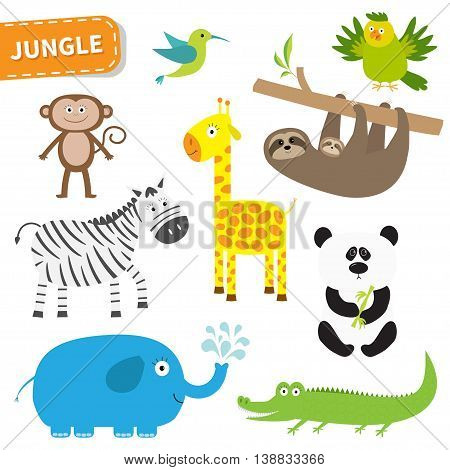Cute jungle animal set. Cute cartoon character. Colibri parrot monkey alligator giraffe sloth zebra panda elephant Baby collection White background. Isolated Flat design Vector illustration