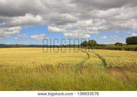 Wolds Wheat Field