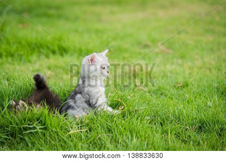 Cute kittens lying on green grass with copy space on right