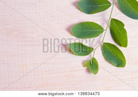 Moringa (Other names are Moringa oleifera Lam. MORINGACEAE Futaba kom hammer vegetable hum Moringa hum bug bug Hoo) leaf on wooden board background