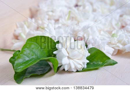 Jasmine (Other names are Jasminum Melati Jessamine Oleaceae Jasmine) flowers spread on wooden board background