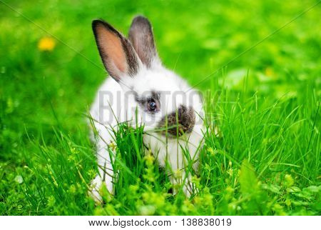 rabbit in green grass ears, bunny spring