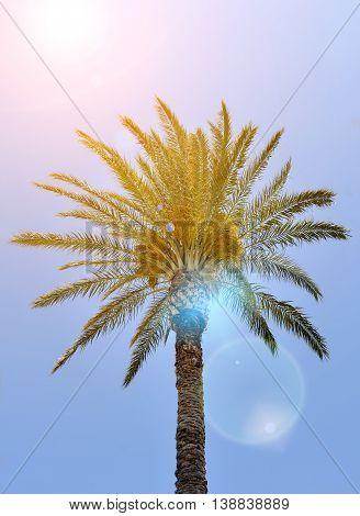 Beautiful palm trees on blue sky Rhodos island Greece