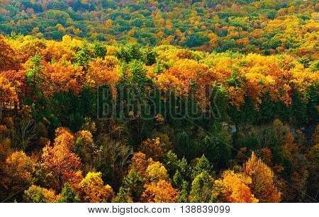 Autumn scene at Letchworth State Park
