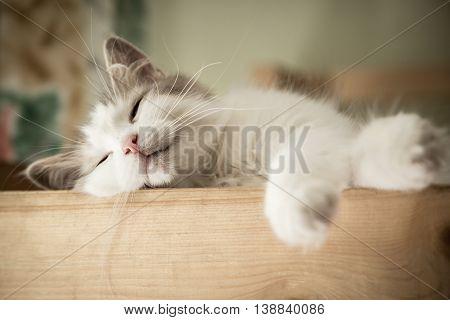 Closeup portrait of sweet sleep white cat