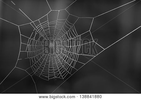 Spiderweb covered in dew on a winter morning