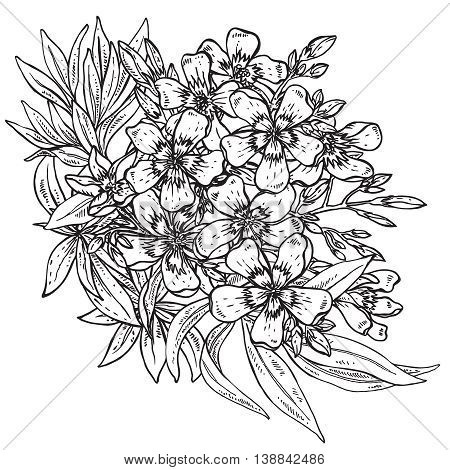 Hand drawn flower Rhododendron bouquet isolated on white background. Vector illustration.