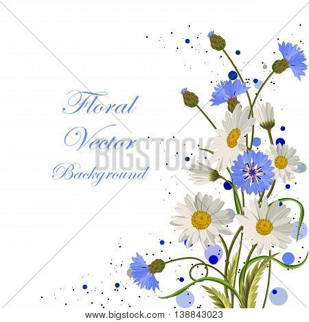 Beautiful daisies and cornflowers on white background.