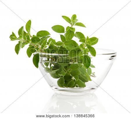 green oregano herb, isolated on white background.