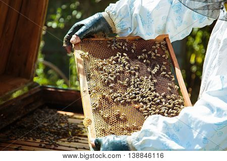 Beekeeper holding honeycomb over the beehive. Open hive