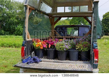 Truck with harvest of flowers at an organic flower farm