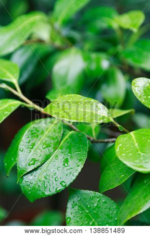 Nice freshness tree twig with wet leaves on green nature background