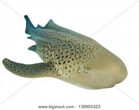 Leopard shark isolated on white background
