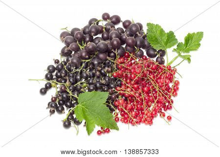 Pile of a fresh blackcurrant redcurrant and jostaberry with leaves on a light background