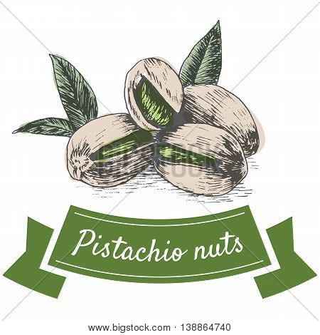 Vector colorful illustration of pistachio nuts. Illustrative sorts of nuts