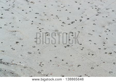 coastal beach detail showing lots of lugworm piles in the sand