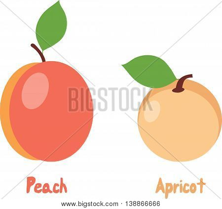 Peach and apricot, vector illustrations on a transparent background