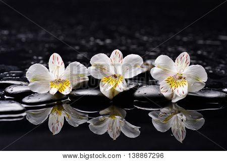 Still life with three orchid with therapy stones