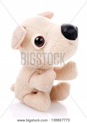Children toy, Soft teddy dog isolated on white background