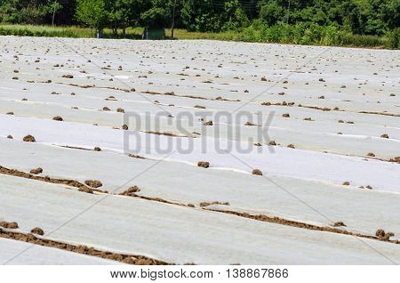 Ground with plastic protecting strips and covers for plant in field