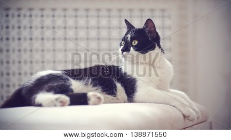 The cat of a black-and-white coloring lies on a sofa.