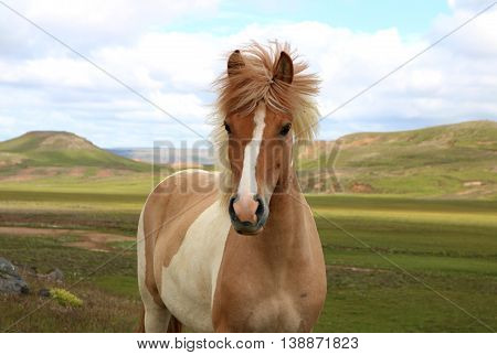 portrait of horse face in mountain landscape