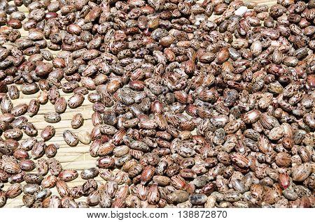 heap of fresh Castor oil seeds-ricinus communis