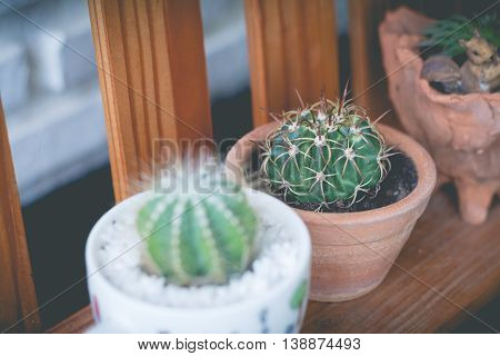 Little cactus plant in the flower pot. Various cactus plants. cactus plants in retro effect image.(selective focus)