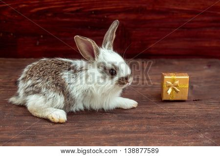 Funny Rabbit And Gift Box