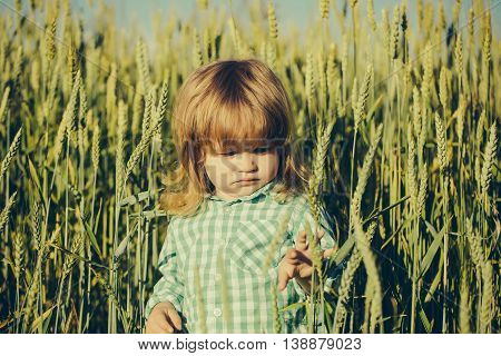 Small boy child with long blonde hair and serious face standing among green field of grass or spikelets sunny day outdoor on natural background in checkered shirt