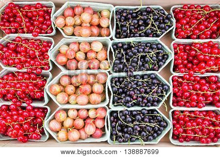 Fruit trays with blackberries currants and gooseberries on market