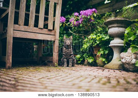 Tabby Cat Sitting Next To Chair In City Summer Garden