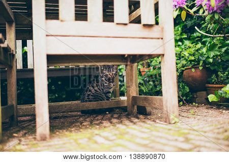 Tabby cat sitting under a garden table