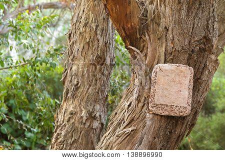 Blank stone sign hanging on dried tree with bark peeling off and blurred tree background