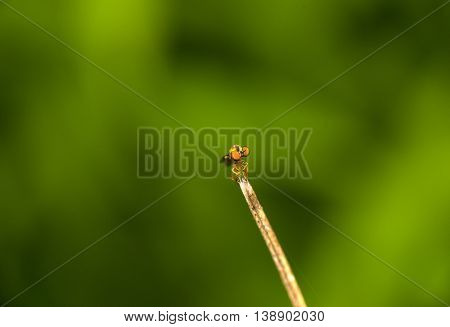compound eyes of a robber fly in focus