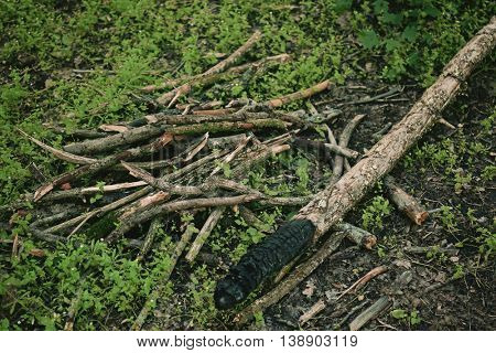 Heap of a tree sticks in a forest