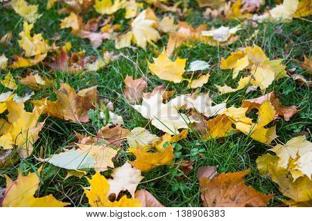 autumn leaves on grass colors, fall, painting, beauty,