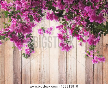 Pink Bougainvillea flower with leaves on wood background