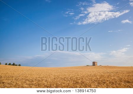 Wheat Field In Famous Provence, South Of France.