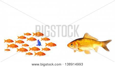 group of little goldfish and big one